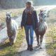 Alpaka Wanderung Schleswig-Holstein